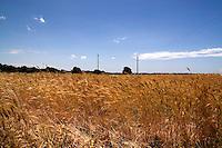 Oria, nei pressi della Masseria Salinelle