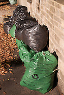 Bags waitng to be collected by Garden Refuse Service run by Veolia for Sheffield City Council,