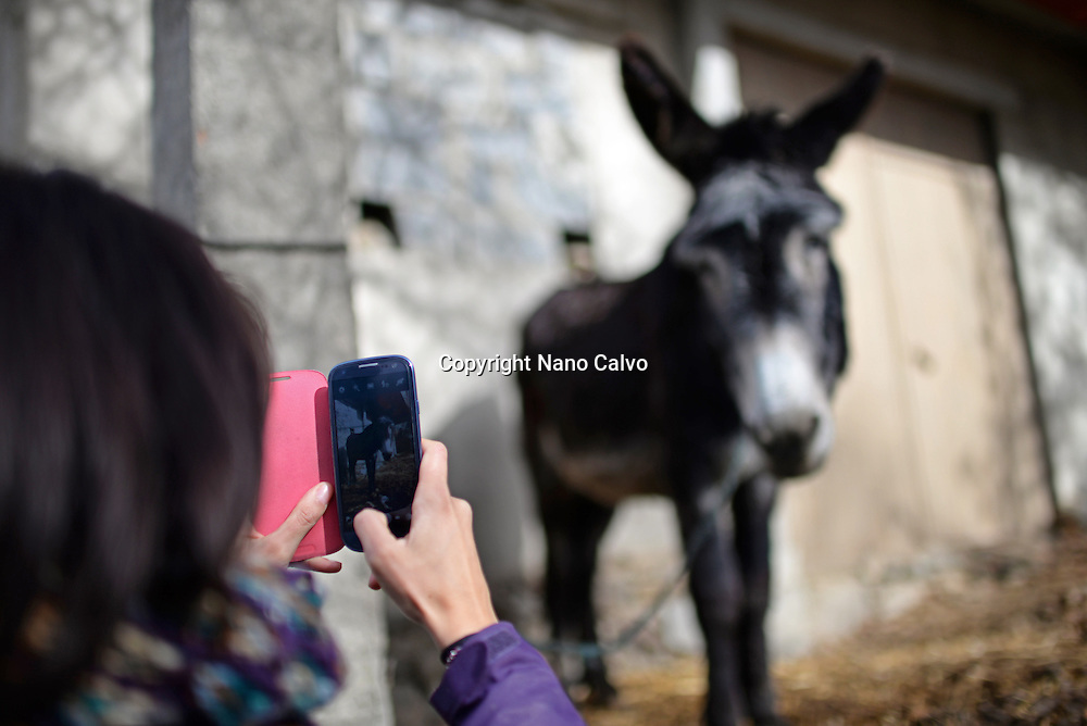 Young woman takes photo of donkey with mobile phone