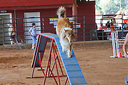 Dog Agility Trials, Kiln, MS.