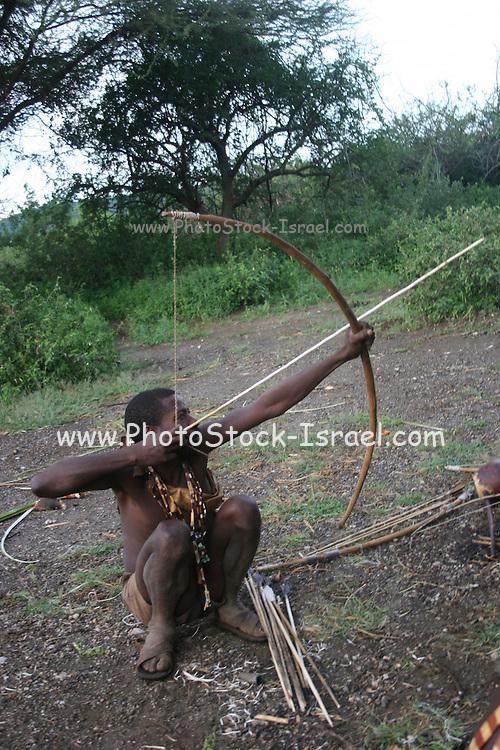 Africa, Tanzania, Lake Eyasi, Hadza man aiming arrow at a bird during a hunting expedition. Small tribe of hunter gatherers AKA Hadzabe Tribe April 2006