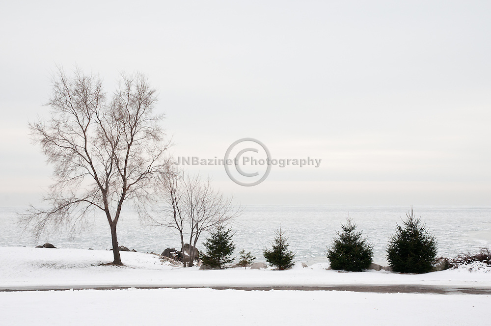 A series of trees on the shoreline of Lake Erie