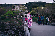 every day Street scene in Japan. Japanese women in traditional Kimono making a selfie next to a blooming cherry tree