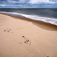Seaweed in the Sand at Druridge Bay near Amble by the Sea on the Northumberland Coast England