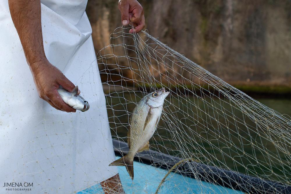 Selección de peces durante el levantamiento del chinchorro, al amanecer.
