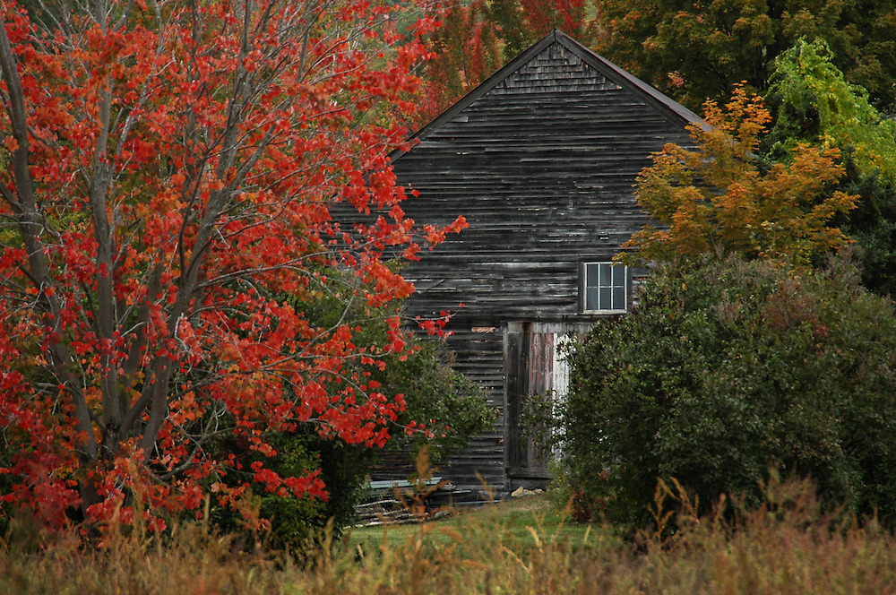 Colors and textures are all over the place in the image of an old barn in the peak foliage season. Taken in Jackson, NH
