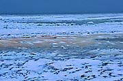 Ice freeze up. Hudson Bay coastline. Subarctic.<br />Churchill<br />Manitoba<br />Canada