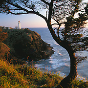 North Head Lighthouse stands on rocky headland over the Pacific Ocean at sunset with gnarled and twisted Pine tree in foreground near the mouth of the Columbia River, Illwaco, Washington USA