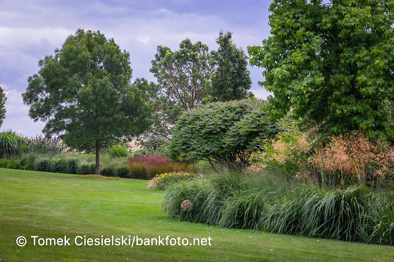 Summer windy border with trees and ornamental grasses