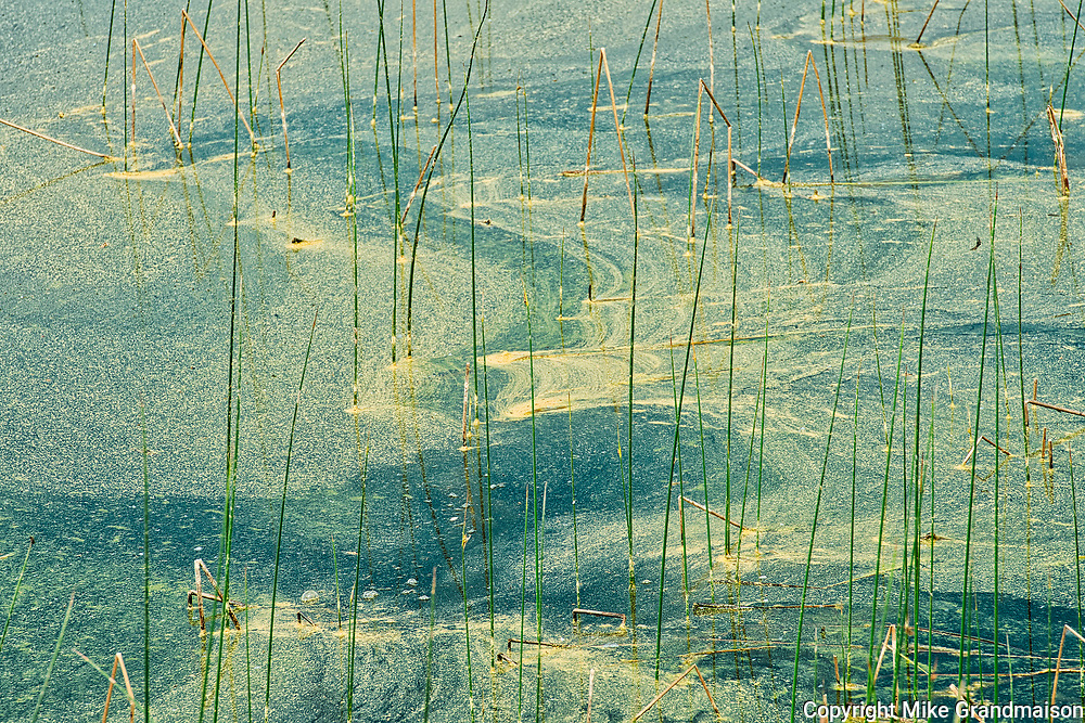 Pollen in the waters of Andy Lake<br />Kenora DIstrict<br />Ontario<br />Canada