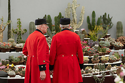 © licensed to London News Pictures. LONDON, UK  23/05/2011. Two Chelsea pensioners look at a catcus display at the 2011 RHS Chelsea Flower Show. The show held each year in the grounds of the Royal Chelsea Hospital and organised by the Royal Horticultural society opens to the general public tomorrow and is already sold out. Please see special instructions for usage rates. Photo credit should read CLIFF HIDE/LNP