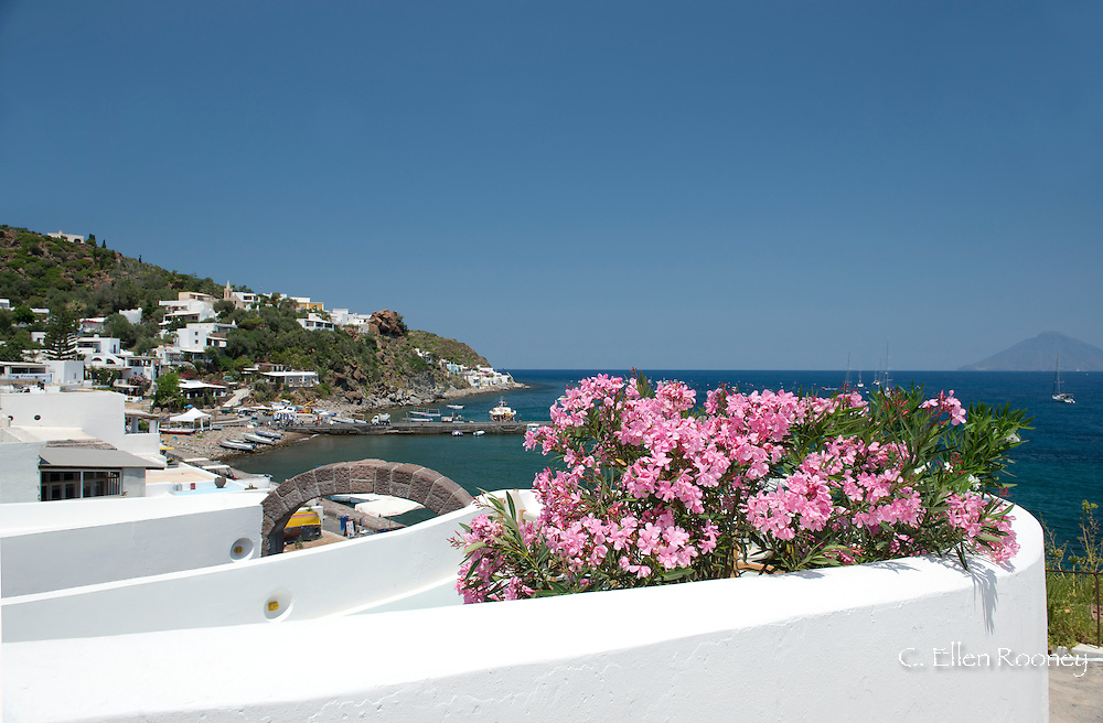 Pink mimosa growing next to a terrace and white washed walls in San Pietro on Panarea, the Aeolian Islands, Messina Province, Sicily, Italy