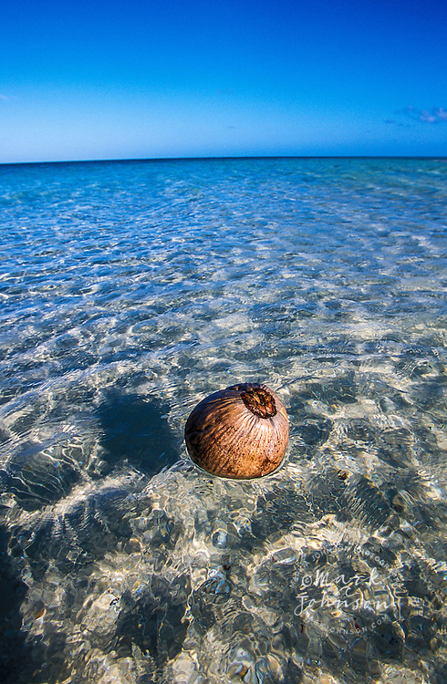 Australia, Queensland, Great Barrier Reef, coconut floating in sea