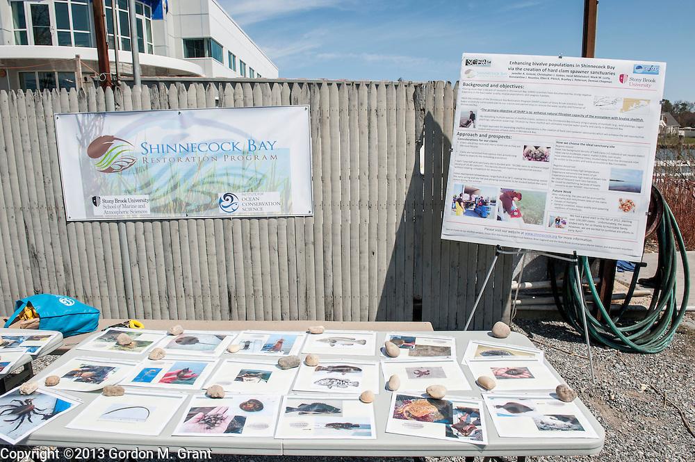 Southampton, NY - 4/27/13 - Shinnecock Bay Restoration Program eelgrass replanting event at Stony Brook University Southampton Campus Marine Station in Southampton, NY April 27, 2013.     (Photo by Gordon M. Grant / Stony Brook University)