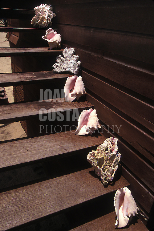BELIZE / Placencia / Conches and corals at the entrance of a house...© JOAN COSTA
