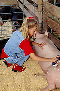 4H girl prepares hog for county fair competition, Hobart Oklahoma, <br /> MODEL RELEASED