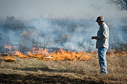 "An unidentified participant at the ""Flames in the Flint Hills"" observes the burning prairie at the Flying W Ranch near Clements, Kansas. This agritourism event allows ranch guests to take part in lighting the prescribed burns. Prairie grasses in the Kansas Flint Hills are intentionally burned by land mangers and cattle ranchers in the spring to prepare the land for cattle grazing and help maintain a healthy tallgrass prairie ecosystem. The burning is also an effective way of controlling invasive plants and trees. The prairie grassland is burned when the soil is moist but grasses are dry. This allows the deep roots of the grasses to survive and the burned grasses on the soil surface return as nutrients to the soil. These nutrients allow for the rapid growth of new grass. After approximately two weeks of burning, new grass emerges. Less than four percent of the original 140 million acres of tallgrass prairie remains in North America. Most of the remaining tallgrass prairie is in the Flint Hills in Kansas."