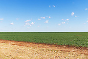 Pasture field under blue sky with cumulus clouds near Kumbia, Queensland, Australia <br />