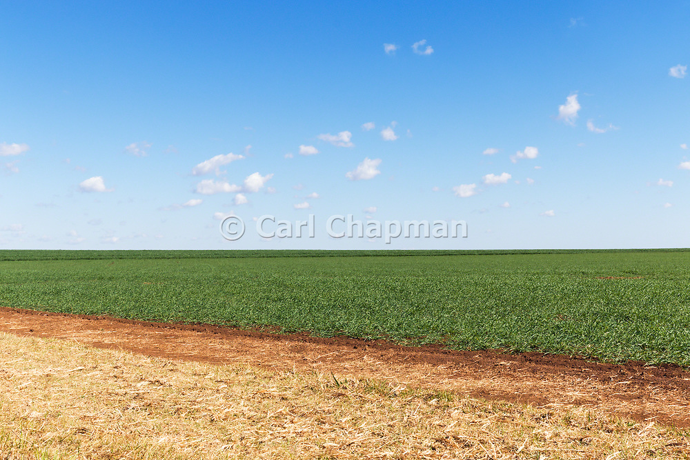 Pasture field under blue sky with cumulus clouds near Kumbia, Queensland, Australia