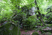 Felsen im Wald, Granit, Felsenpark, Schlosspark Falkenstein, Falkenstein, Vorderer Bayerischer Wald, Bayern, Deutschland | rock gardens, granite, castle gardens Falkenstein, Falkenstein, Bavarian Forest, Bavaria, Germany