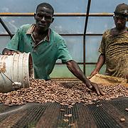 Cocoa Processing PISA Haiti - Cap-Haitien