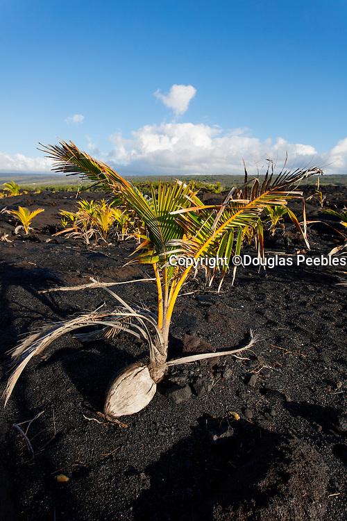 Kalapana, Kaimu Bay, new black sand beach, , The Big Island of Hawaii