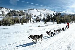JH 204 Pet of the Week ..JANN HENDRY/Acorn Newspapers..DOG SLEDDINGóHope Valley near Lake Tahoe