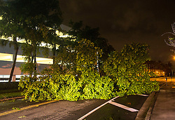October 7, 2016 - Florida, U.S. - A downed tree blocks Clearwater Drive in downtown West Palm Beach before dawn Friday, October 7, 2016 after the passing of Hurricane Matthew. (Credit Image: © Lannis Waters/The Palm Beach Post via ZUMA Wire)