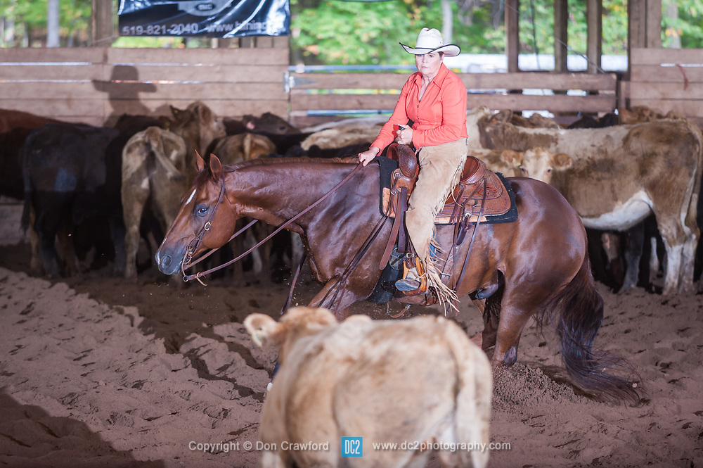 September 24, 2017 - Minshall Farm Cutting 6, held at Minshall Farms, Hillsburgh Ontario. The event was put on by the Ontario Cutting Horse Association. Riding in the $1,000 Amateur Class is Lynne Purdie on Timothy Taz owned by the rider.