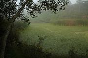 Brackish water pond with fog.