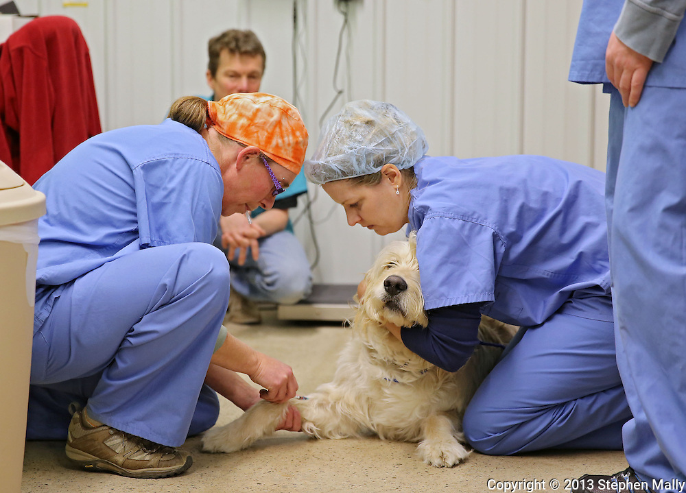 Lead Veterinarian Technician Stacy Dykema administers an inducing drug to a dog held by Veterinarian Assistant Lisa Chapman prior to surgery at Iowa Humane Alliance, 6540 6th Street SW in Cedar Rapids on Monday, January 14, 2013.
