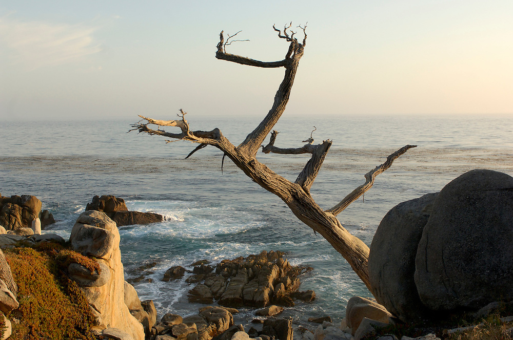 Pesadero Point, Pebble Beach, 17 Mile drive, Monterey Peninsula, Monterey, California, United States of America