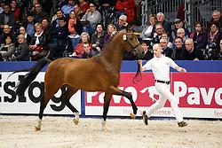 604 - Gentle T<br /> KWPN Stallion Selection - 's Hertogenbosch 2014<br /> © Dirk Caremans
