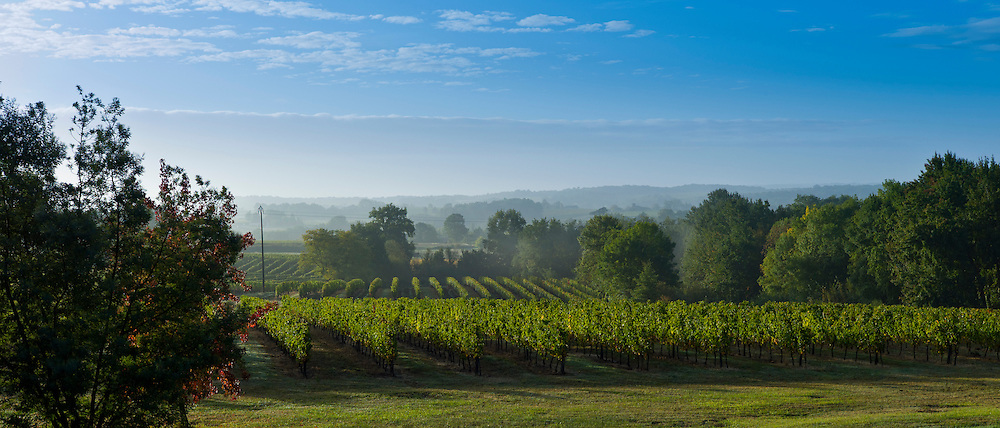 Vineyard of Cabernet Sauvignon vines at Chateau Fontcaille Bellevue in Bordeaux wine region of France