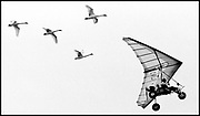 Wayne Bezner Kerr leads his feathered crew of four trumpeter swans on a flight towards  Muscatatuck National Wildlife Refuge near SeymourIn. The flight, from Canada to Indiana, was an experiment in restablishing migration for the Swans.