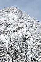 Snow-Covered Trees on Mount Baldy Mountain Slope, Angeles National Forest, California