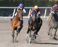 Big Drama captures the Mr. Prospector Stakes at Gulfstream Park on 1/15/11. Ridden by Eibar Coa