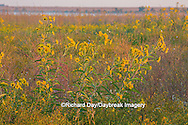 63863-02511 Wildflowers at Prairie Ridge State Natural Area, Marion Co., IL