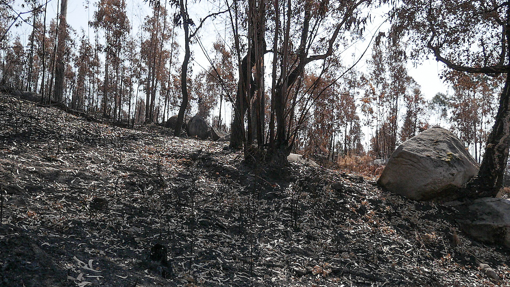 The month of August, when temperatures are high, winds blow strongly and woodland is parched, is traditionally the peak time for wildfires in Portugal and other southern European countries.