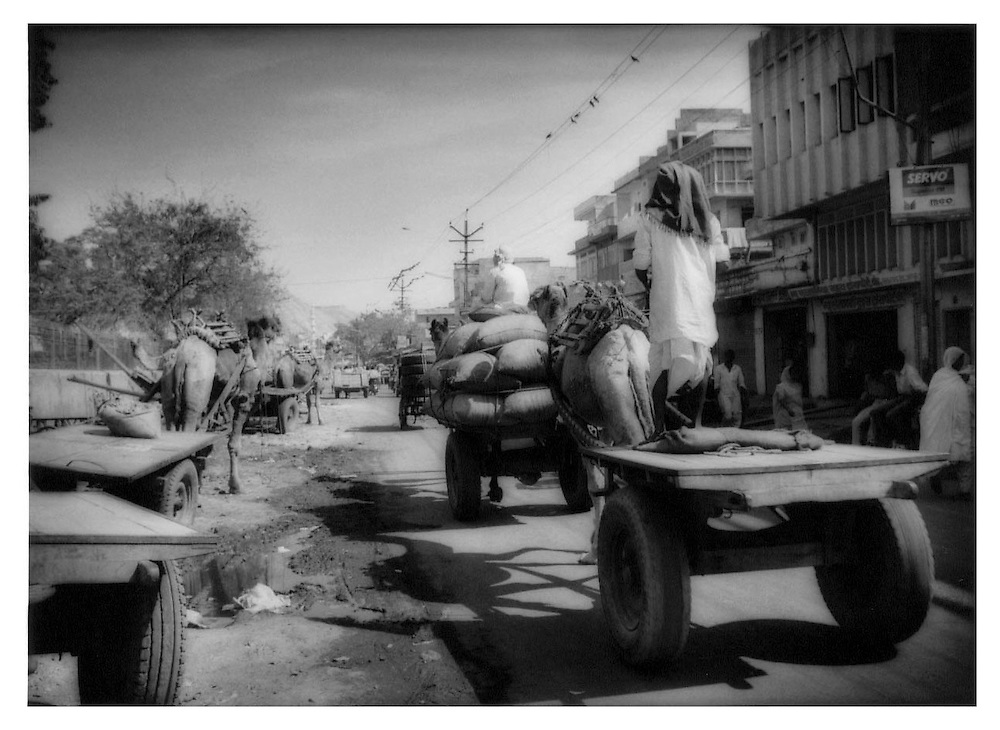 Camel carts ply the streets of Jaipur, Rajasthan.