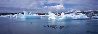 Ducks swimmng at Jokulsárlón Glacier Lagoon, East Iceland. Endur synda á Breiðaármerkuróni.<br />