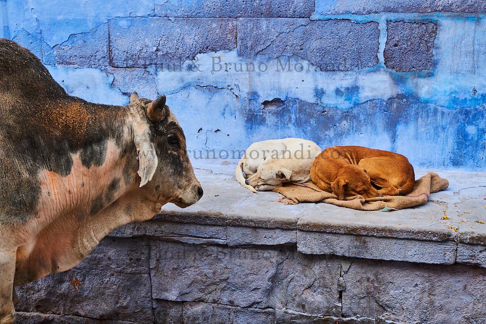 Inde, Rajasthan, Jodhpur la ville bleue // India, Rajasthan, Jodhpur, the blue city