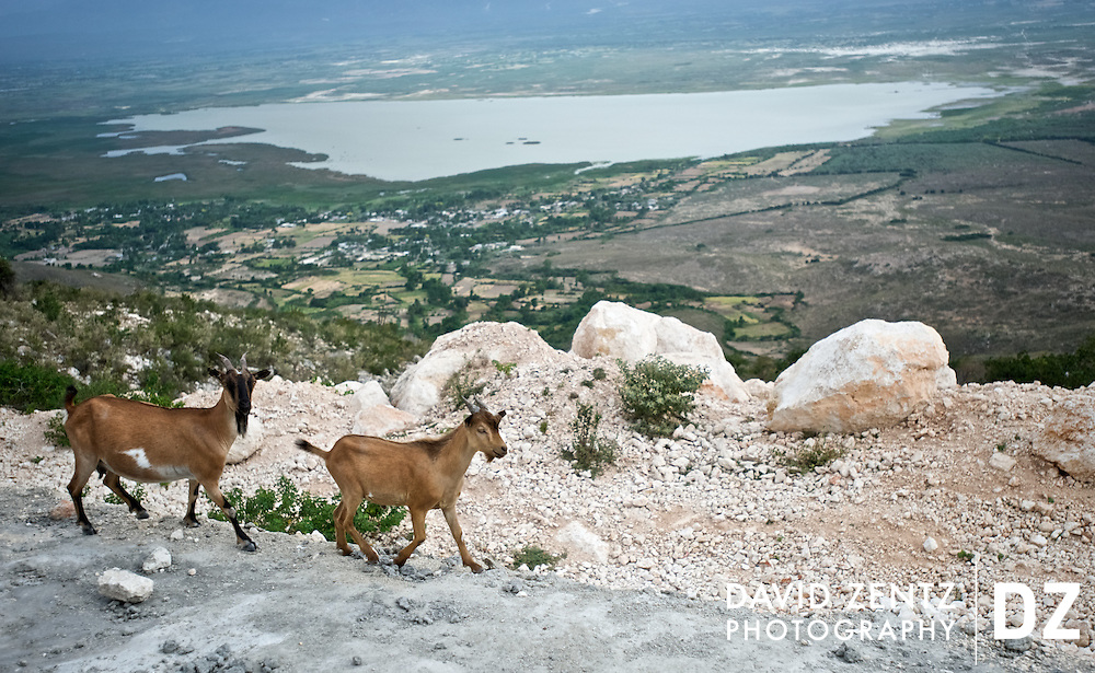 Goats walk along a cliff overlooking Trou Cai?man, a salt water lake in central Haiti, on July 16, 2008.