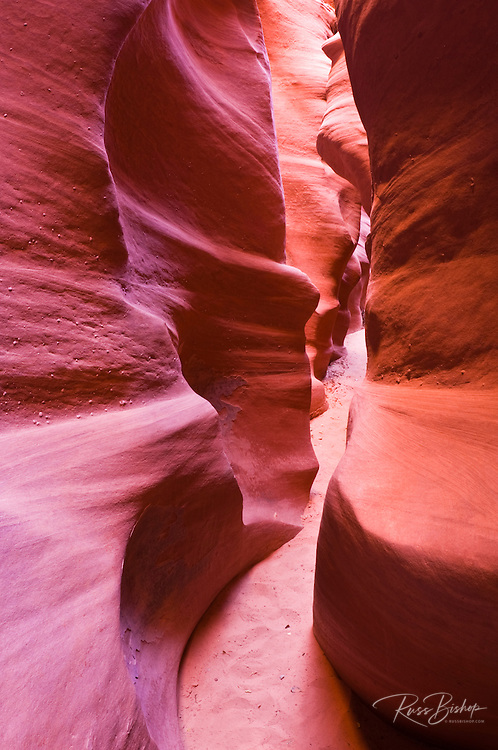 Slot canyon in Spooky Gulch, Grand Staircase-Escalante National Monument, Utah USA