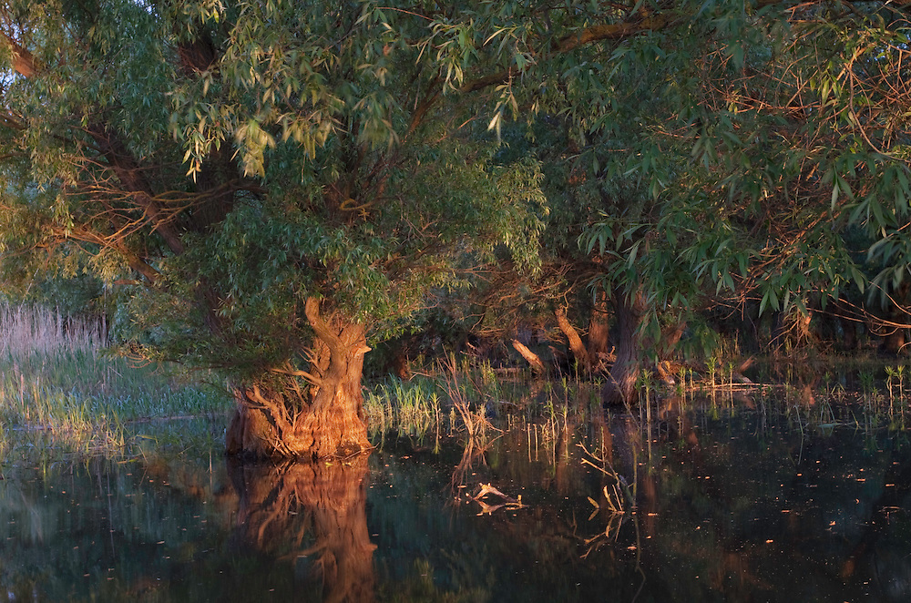 Danube Delta; Salix riverine forest; Romania. May 2009 Mission: Danube Delta