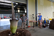 """Spike"" the rare ‎Titan Arum aka ‎corpse ‎plant bloomed today after 9 years in a greenhouse. It was brought outside to ‎bloom because the putrid smell and to see what bugs it would attract.  Horticulturist at Mississippi State University ‎Agricultural and experiment station in ‎Poplarville Mississippi want to study what kind of insects it attracts. It has also attracted a good number of visitors. ""Spike"" or the corpse plant ,Titan Arum the largest flower in the world is smells  like rotting meat. Pictured is artist Ellen Langford making photos of ""Spike"" to later make paintings from.Photo © Suzi Altman"
