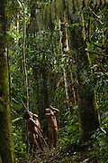 Huaorani Indians - Mipo Wira, Ontogamo Kaimo & Oña Yate out hunting with their blowguns. Gabaro Community. Yasuni National Park.<br /> Amazon rainforest, ECUADOR.  South America<br /> This Indian tribe were basically uncontacted until 1956 when missionaries from the Summer Institute of Linguistics made contact with them. However there are still some groups from the tribe that remain uncontacted.  They are known as the Tagaeri and Taromanani. Traditionally these Indians were very hostile and killed many people who tried to enter into their territory. Their territory is in the Yasuni National Park which is now also being exploited for oil.