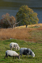 © Licensed to London News Pictures. 19/010/2016. Rhayader, Powys, UK. Autumn landscape in the Elan Valley, near Rhayader, Powys, Wales, UK. Photo credit: Graham M. Lawrence/LNP