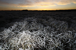 © Licensed to London News Pictures. 03/01/2017. Epsom, UK. Frost covers Epsom Downs. Parts of the UK are experiencing temperatures as low as -5 degrees centigrade. Photo credit: Peter Macdiarmid/LNP
