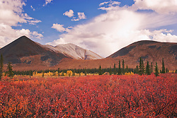 Big puffy clouds fill the sky over an autumn landscape in the Ogilvie Mountains of the Yukon Territory, Yukon Territory, Canada